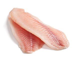 fresh large tilapia filet