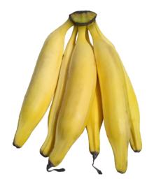 fresh plantains